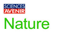 Science & Avenir - Nature